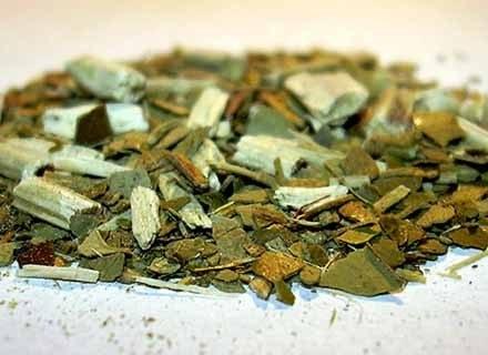 Herba mate fot. Andre Karwath, Creative Commons /Kopalnia Wiedzy
