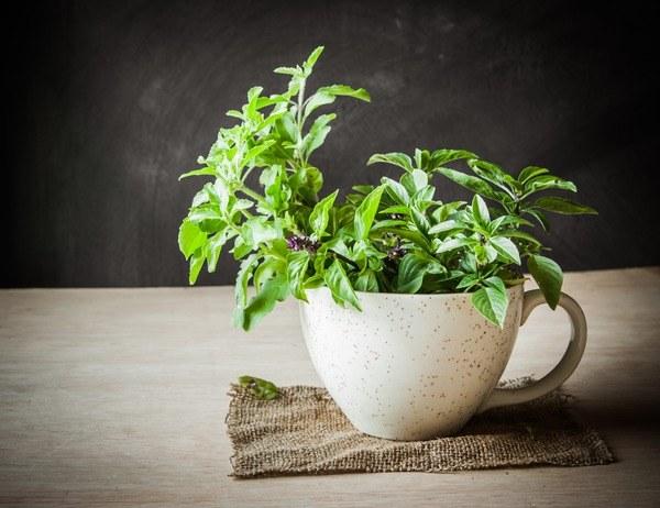herbata tulsi /© Photogenica