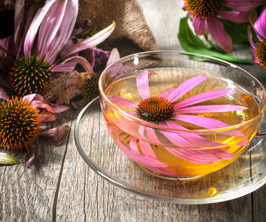 Herbata z echinacei: Właściwości i zastosowania