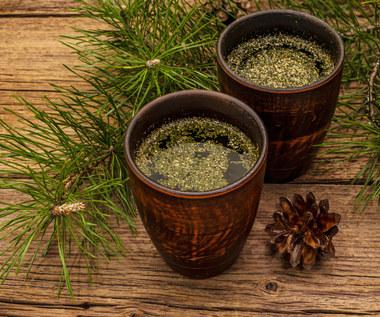 Herbata z igieł sosny: Na co pomoże?