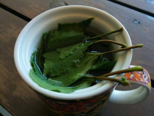 herbata z liści brzozy /© Photogenica