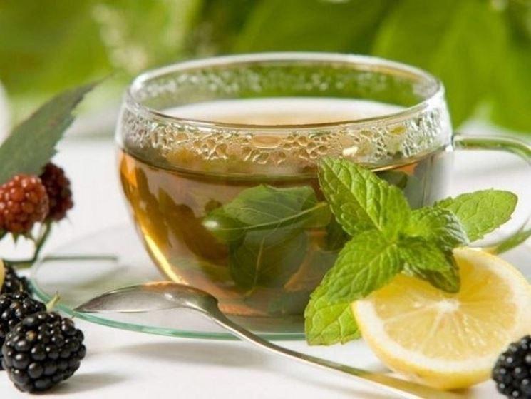 Herbata z melisy właściwości /© Photogenica