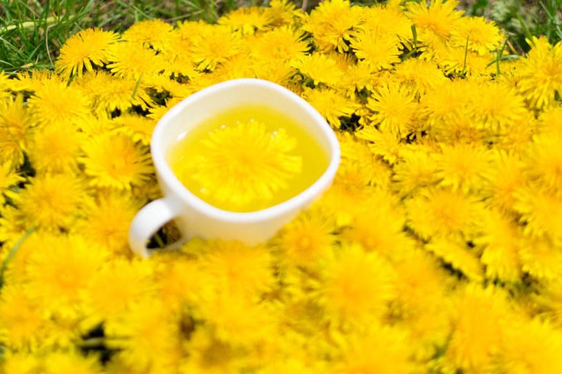 Herbata z mniszka /©123RF/PICSEL