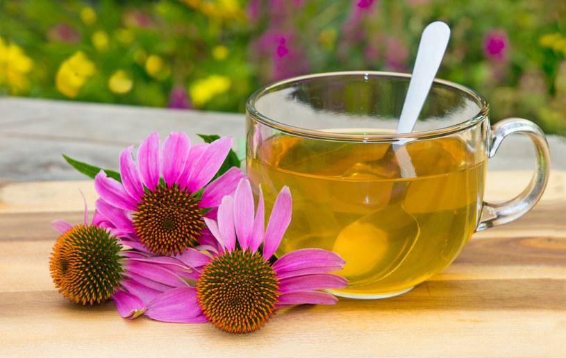 Herbatka z jeżówką /123RF/PICSEL