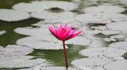 Heviz: Zażyj kąpieli wśród lotosów