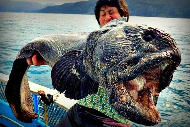 łowić ryby na randki