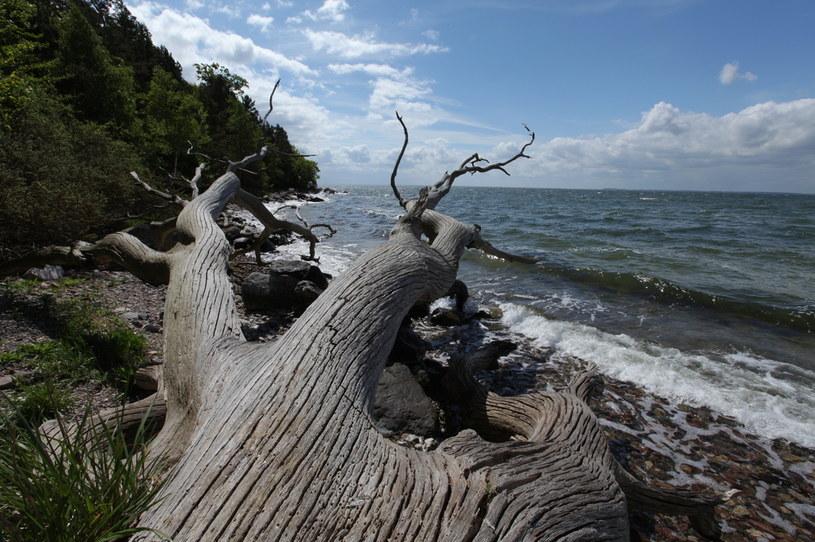 Historia Bałtyku jest niezwykle krótka w sensie geologicznym, ale za to niezwykle dynamiczna /Polsat Doku /materiały prasowe
