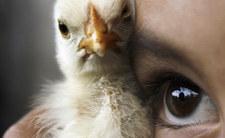 """Historia """"dziewczynki kurczaka"""". Prawda wyszła po latach"""