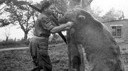 Historia żołnierza... niedźwiedzia