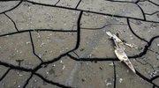 Hiszpania: Największa susza od 1912 roku
