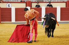 Hiszpania: Odwołano korridę m.in. z powodu imion byków