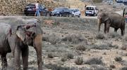 Hiszpania: Wypadek ciężarówki przewożącej słonie