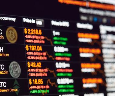Holandia. Chcą zakazać bitcoinów i innych kryptowalut