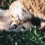 Holandia: Psy i koty przenoszą koronawirusa. Najnowsze badania