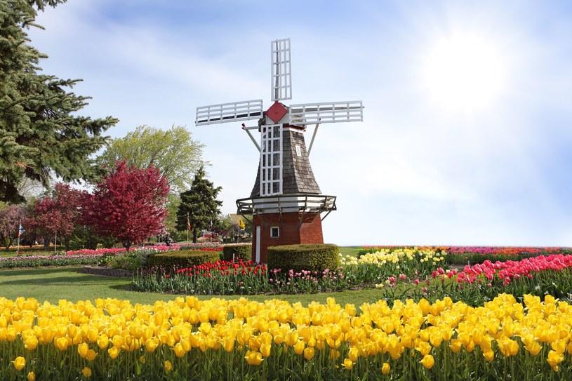 Holandia zmienia przepisy skarbowe /123RF/PICSEL