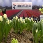 Holendrzy zacierają ręce. Wysłali do Rosji kwiaty za miliony euro