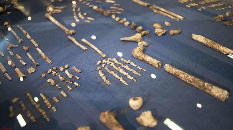 Homo naledi liczy tylko 250 000 lat /materiały prasowe