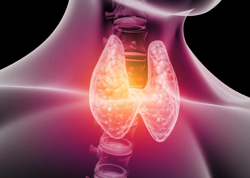 Hormony tarczycy mają kluczowy wpływ na prawidłowy metabolizm naszego organizmu /123RF/PICSEL
