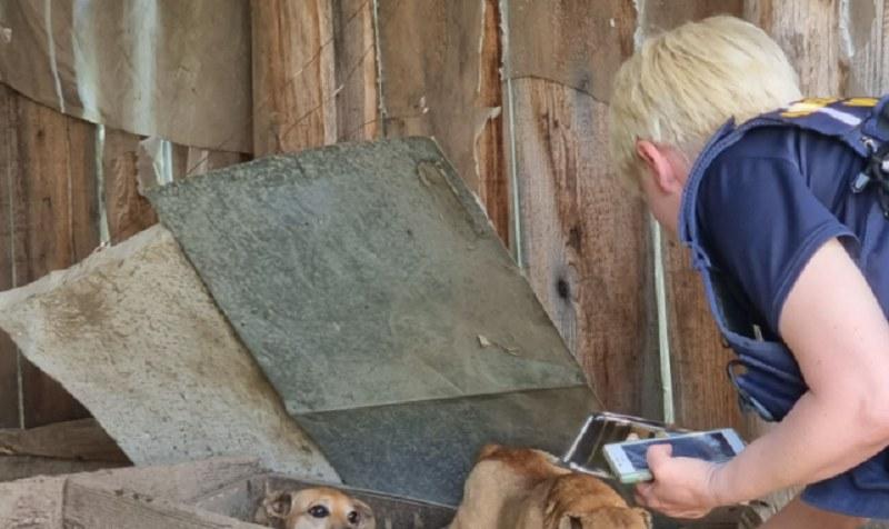 Horror w Małopolsce! Hodował psy na smalec! /Facebook
