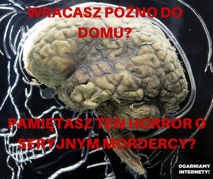 Horror /INTERIA.PL