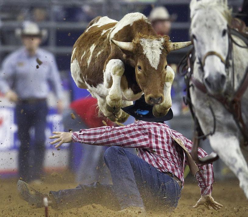 Houston Livestock Show and Rodeo w Teksasie to największe rodeo świata /AP /East News