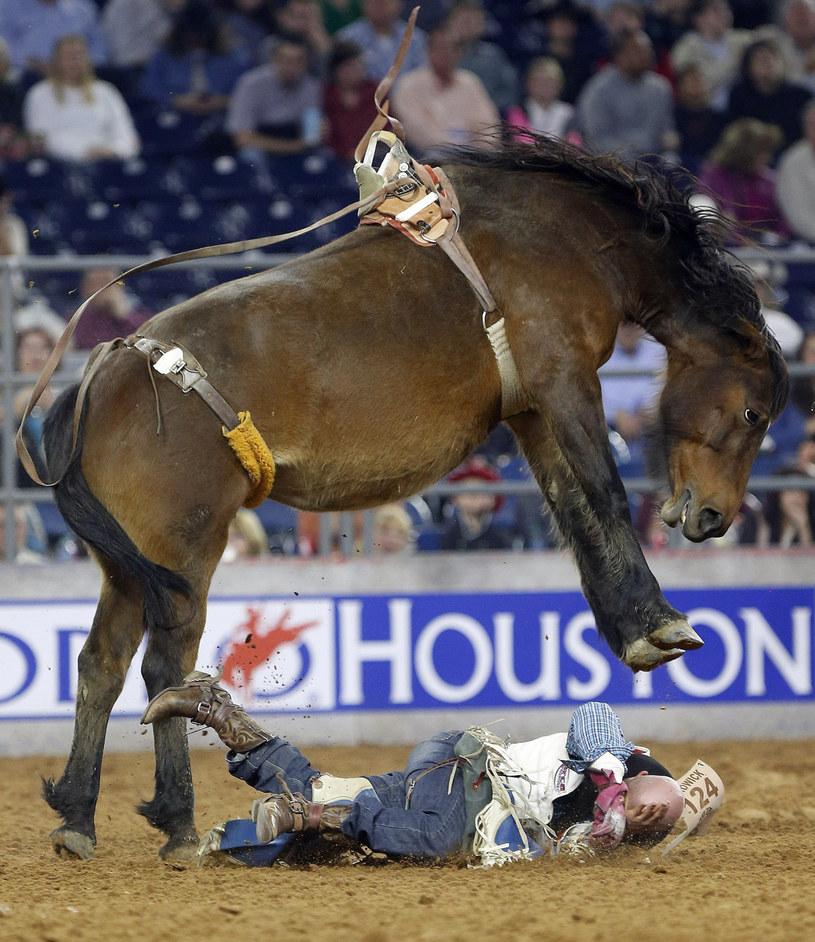 Houston Livestock Show and Rodeo w Teksasie /AP /East News