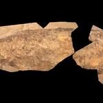 Ichtiozaury były ciepłokrwiste?