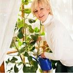 Idealne miejsca dla roślin