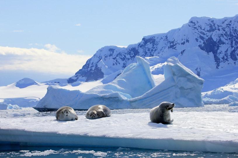 Idealnie biała Antarktyka to już przeszłość /123RF/PICSEL