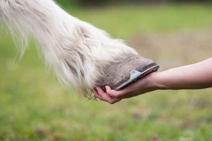 Ile palców ma koń? /123RF/PICSEL