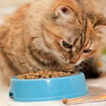Ile razy dziennie karmić kota?