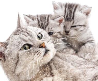 Ile trwa ciąża u kota lub u psa i jak przebiega?