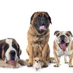 Ile żyje pies? Jak obliczyć wiek psa?