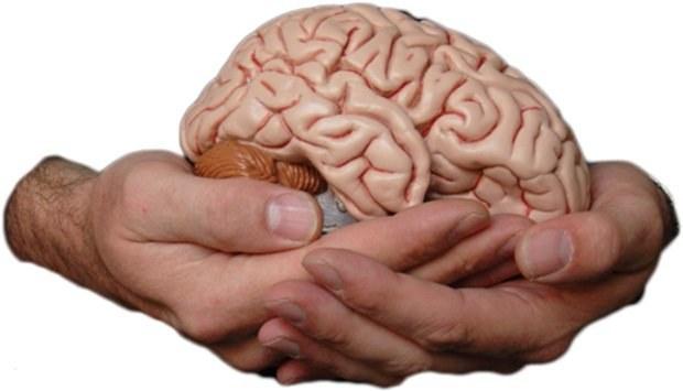 Ilość soli a rozwój mózgu /© Photogenica