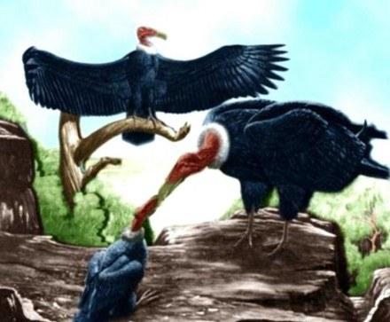 Ilustracja przedstawiająca wygląd Ptaka Gromu z indiańskich legend /MWMedia