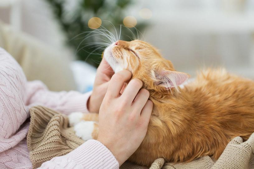 Im więcej czasu poświęcisz kotu, tym lepszą bedziesz mieć z nim relację /123RF/PICSEL