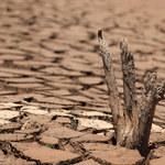 IMGW: Czy 2021 rok będzie rokiem suszy?