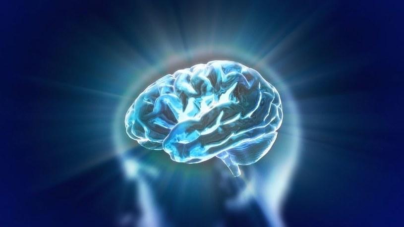 Implant w mózgu poprawi pamięć i umożliwi nam nauczenie się nowych umiejętności /123RF/PICSEL