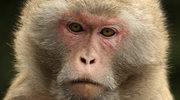 Indie: Małpa porwała niemowlę i upuściła do studni?