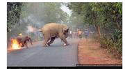Indie: Nagrodzono zdjęcie płonącego słonia