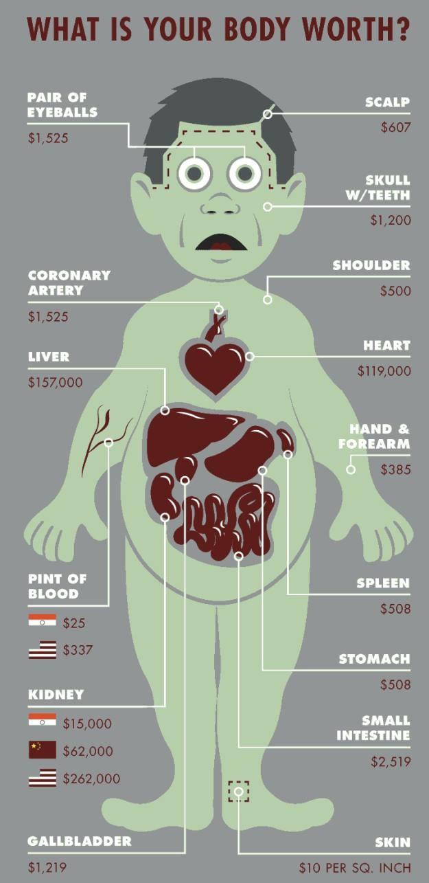 Infografika przedstawiająca które z organów są najcenniejsze (Fot. Medical Transcription) /Internet