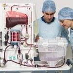 Innowacyjny sposób przechowywania wątroby do przeszczepu