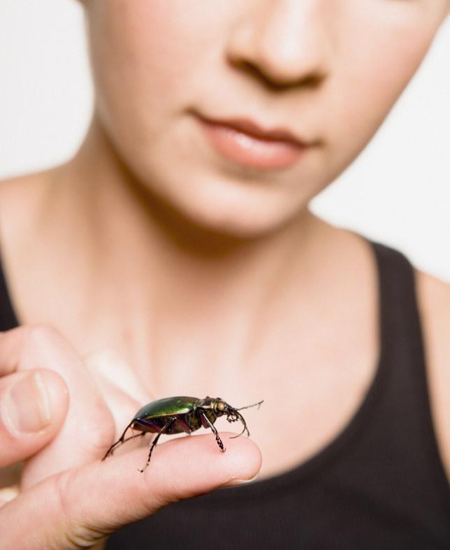 insekty w domu /© Photogenica