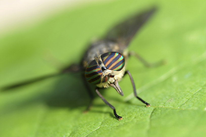 insekty /© Photogenica