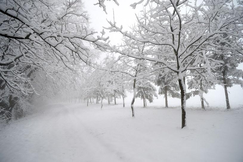 Intensywne opady śniegu na Podkarpaciu /Darek Delmanowicz /PAP
