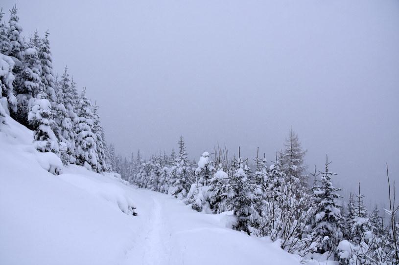 Intensywne opady śniegu w Tatrach /Albin Marciniak /East News