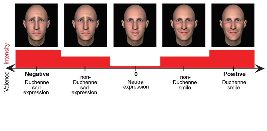 Intensywność emocji wyrażanych z markerami Duchenne'a i bez /Udostepnione przez autoró pracy /Materiały prasowe