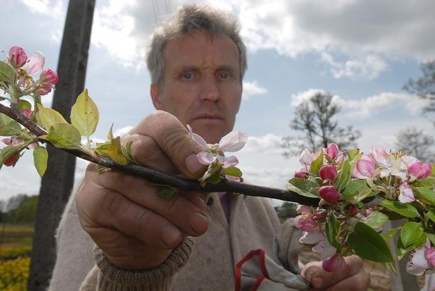 Interesy sadowników są zagrożone. Fot. Michał Kosc /Reporter