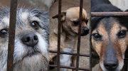 INTERIA.PL organizuje zbiórkę dla bezdomnych zwierząt!