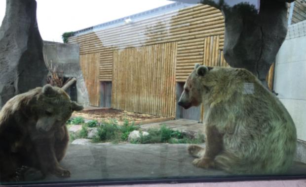 """Internauci stanęli w obronie """"niedźwiadka"""" ze sławnego filmu"""